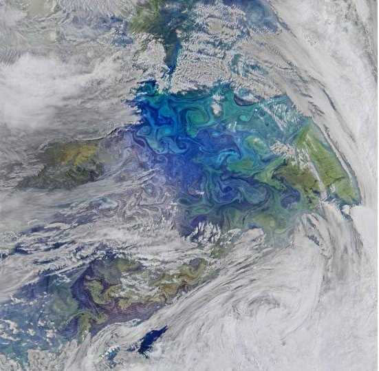 南水北调中线藻类人工智能鉴定的突破